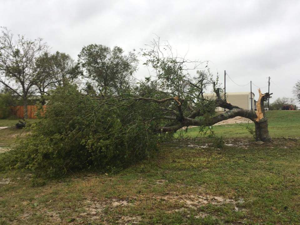 images/TDS-Storm-Damaged-Trees-Button.jpg
